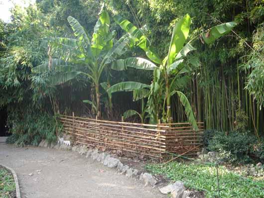 плетёнка возле банановых пальм