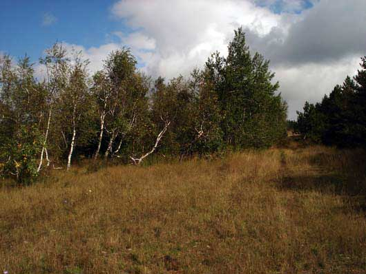 Берёзовая роща на плато Ай-Петри
