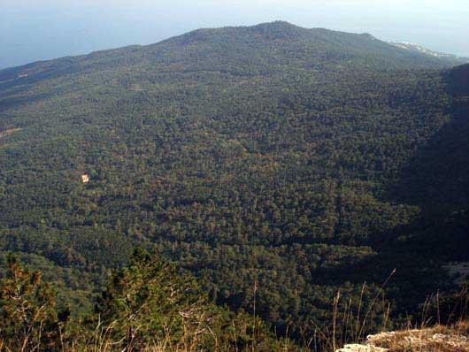 Лес на плато Ай-Петри
