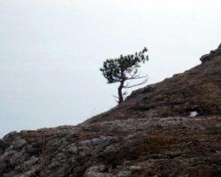 одинокое дерево на отвесной скале