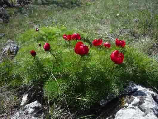 Цветы на плато