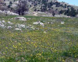 цветочные поля на плато