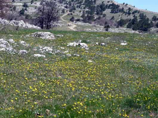 цветочные поля на плато Ай-Петри