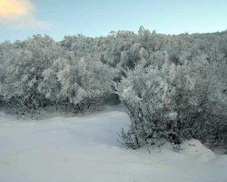 Заснежаные деревья