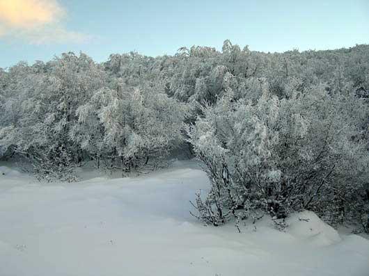 Заснеженные деревья на плато Ай-Петри