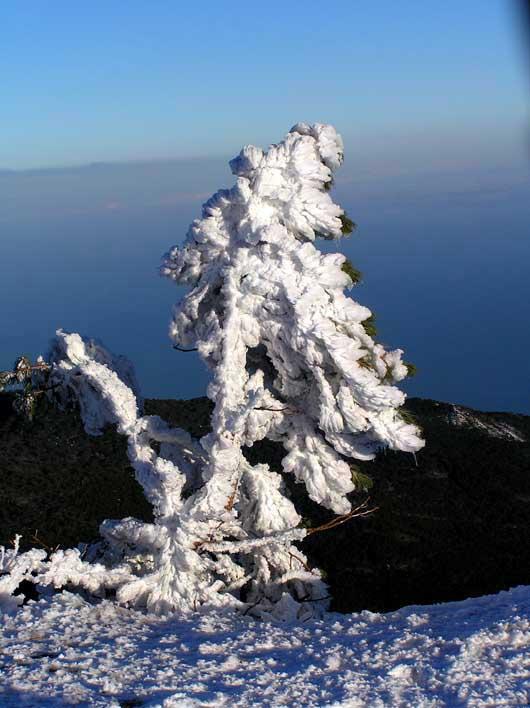 зимняя скульптура из дерева созданная природой