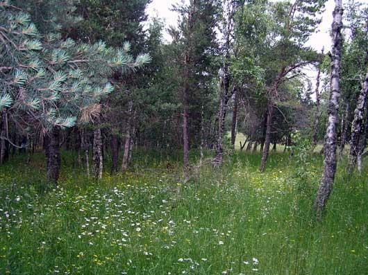 Осенний Крымский лес