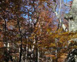 Чатыр-Даг веловский лес