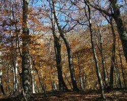 Растительность на Чатыр-Даге
