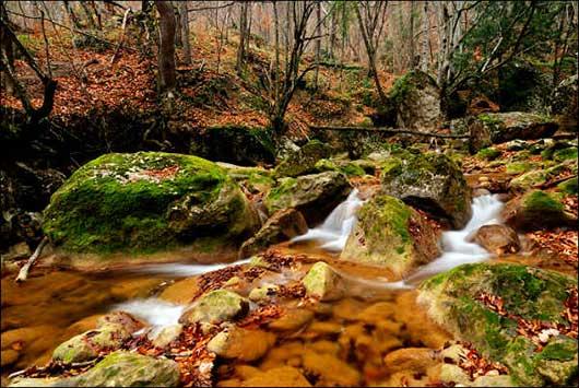Крымский лес в осенний период