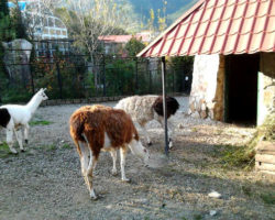 zoopark10