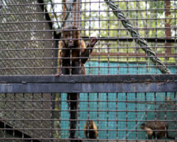 zoopark11