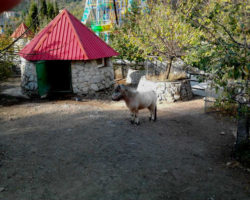 zoopark4