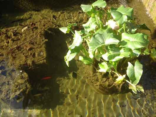 бассейн с красными рыбками