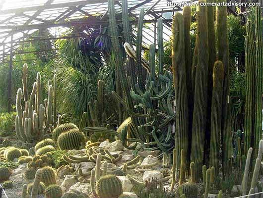 разновидности кактуса