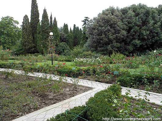 никитский ботанический сад летом