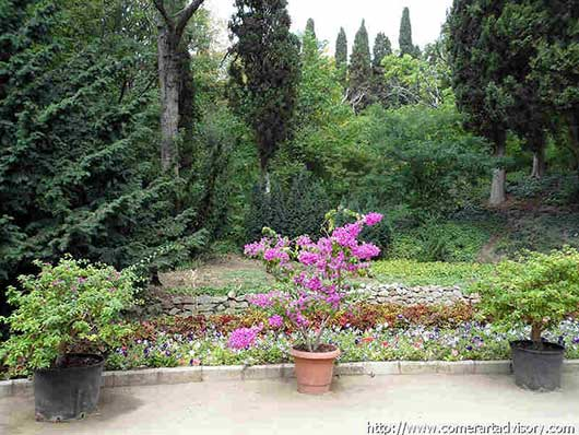 никитский ботанический сад растения