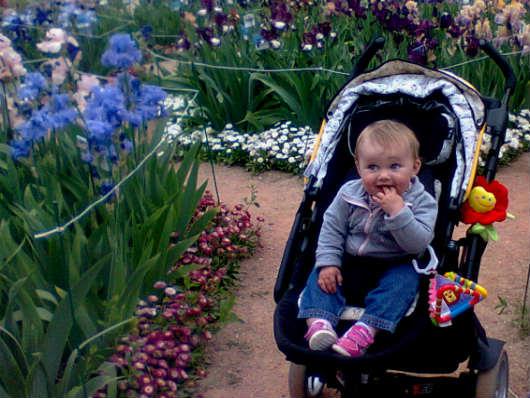 никитский ботанический сад ирисы