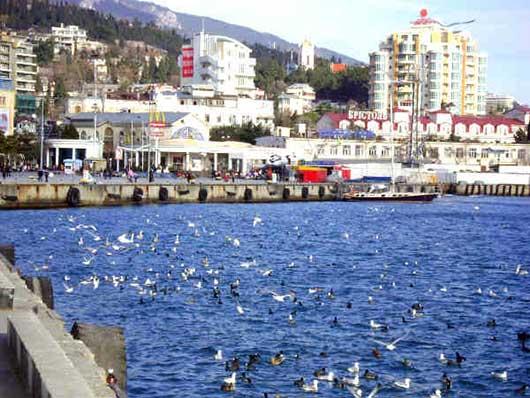птичий базар на набережной