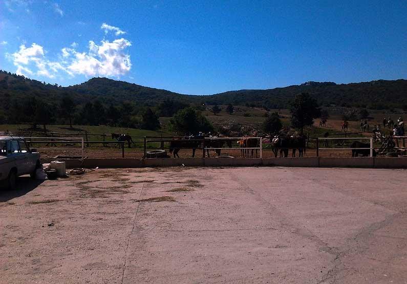 Прогулка на лошадях на плато Ай-Петри