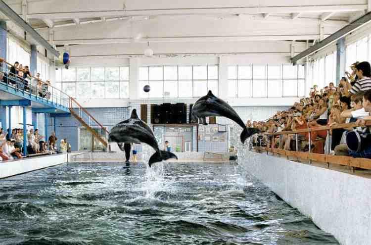 Карадгский дельфинарий в пгт.Курортном