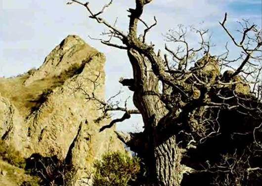 природный заповедник Карадаг