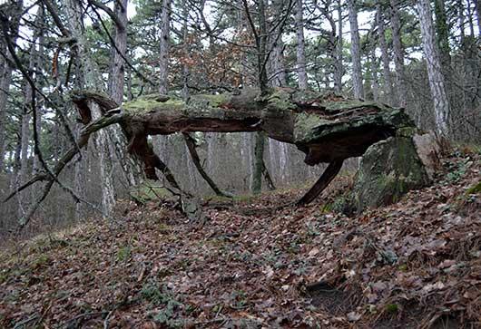 лес над Никитой