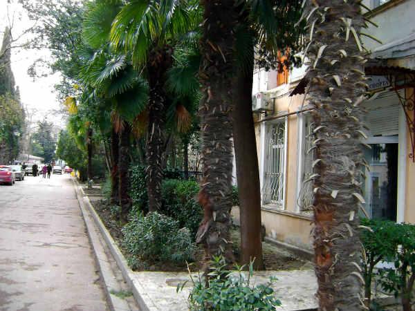 Улица Пальмира-Тольятти в Ялте