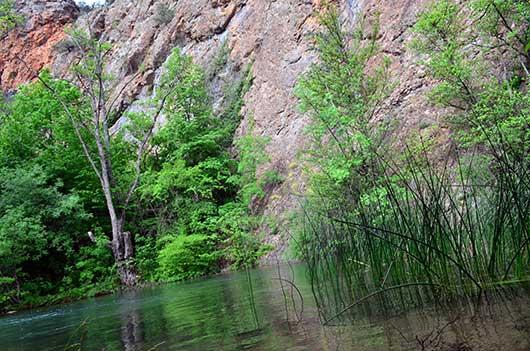 Природа Чернореченского каньона