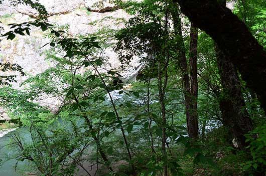 Лесной массив в чернореченском каньоне