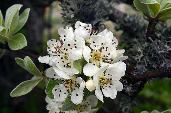 Весна в Ялте