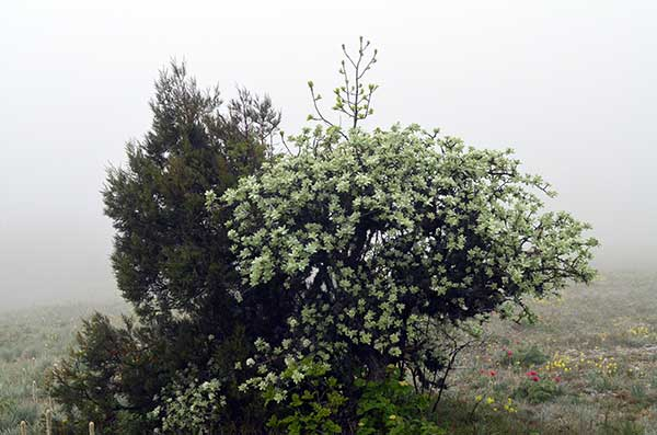 Растительность Беш-Текне