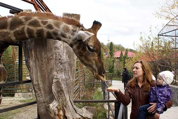 Жираф в зоопарке фото