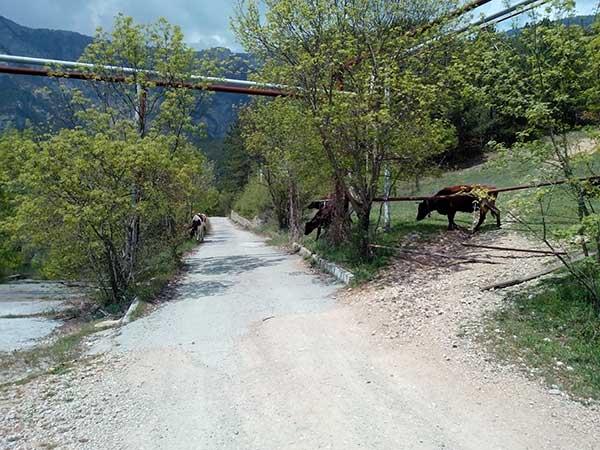 Дорога в сторону Боткинской тропы