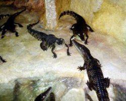 krokodilyarium7