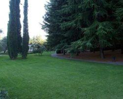 Ухоженные газоны парка