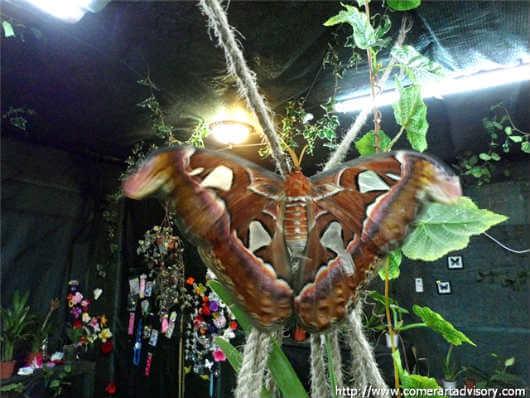 Выставка тропических бабочек в Ялте