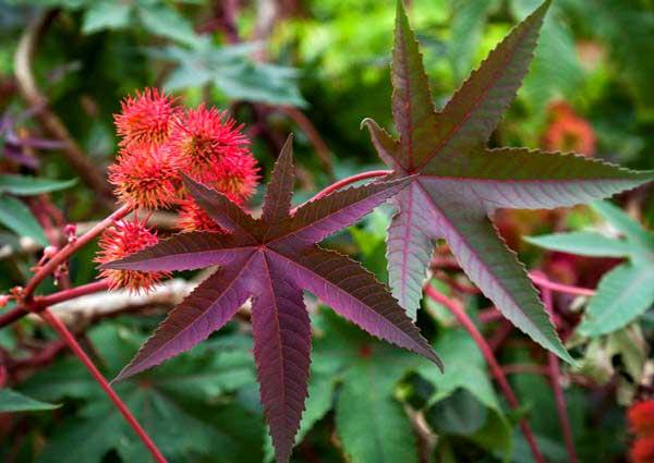 Масличные культуры и растения: лен 94