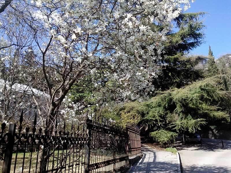 Никитский ботанический сад весной