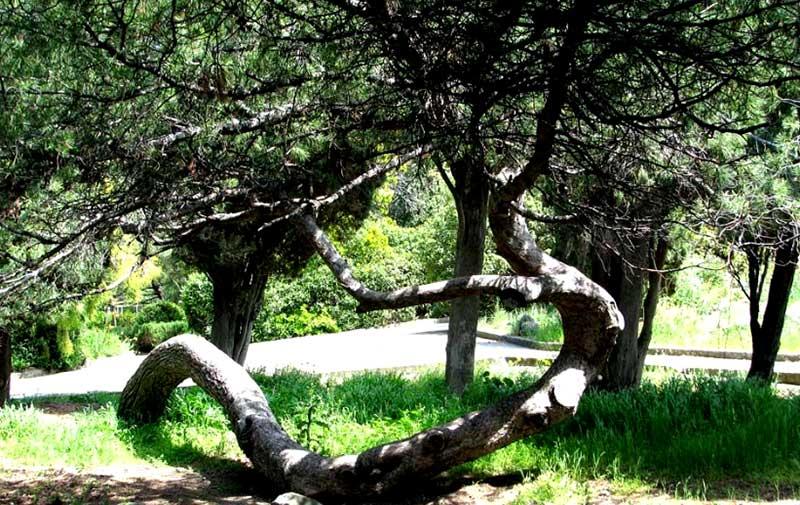 растительность Форосского парка