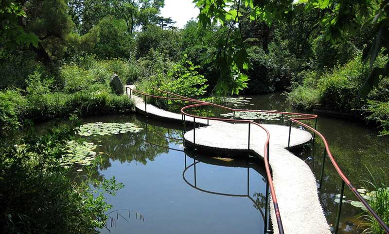 Кувшинки в водоёме Форосского парка