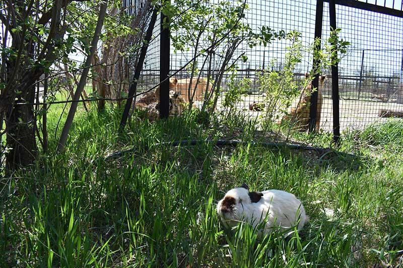 Животные сафари - парка