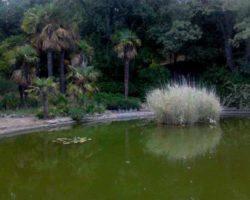 Небольшой пруд в парке