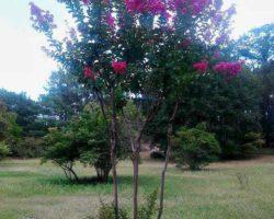 Растения парка