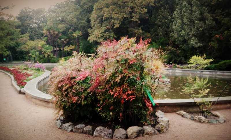 Растения произрастающие в парке