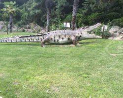 Парк динозавров - фото 4