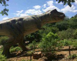 Парк динозавров - фото 16