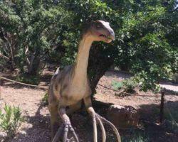 Парк динозавров - фото 15