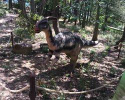 Парк динозавров - фото 14