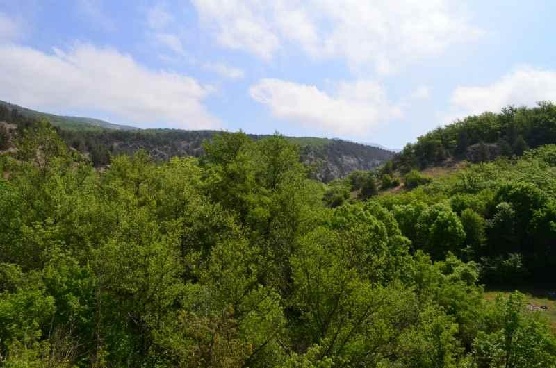 Природа каньона